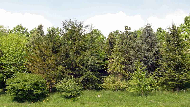 Scorcio-arboreto